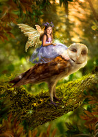 Spring Fairy Owl Journey